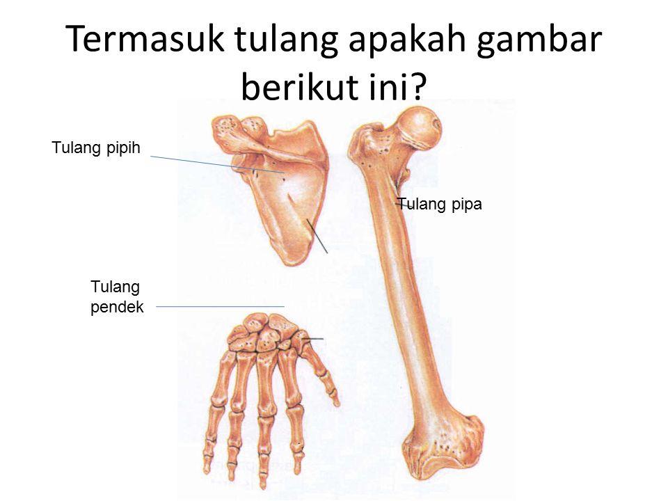 Termasuk tulang apakah gambar berikut ini