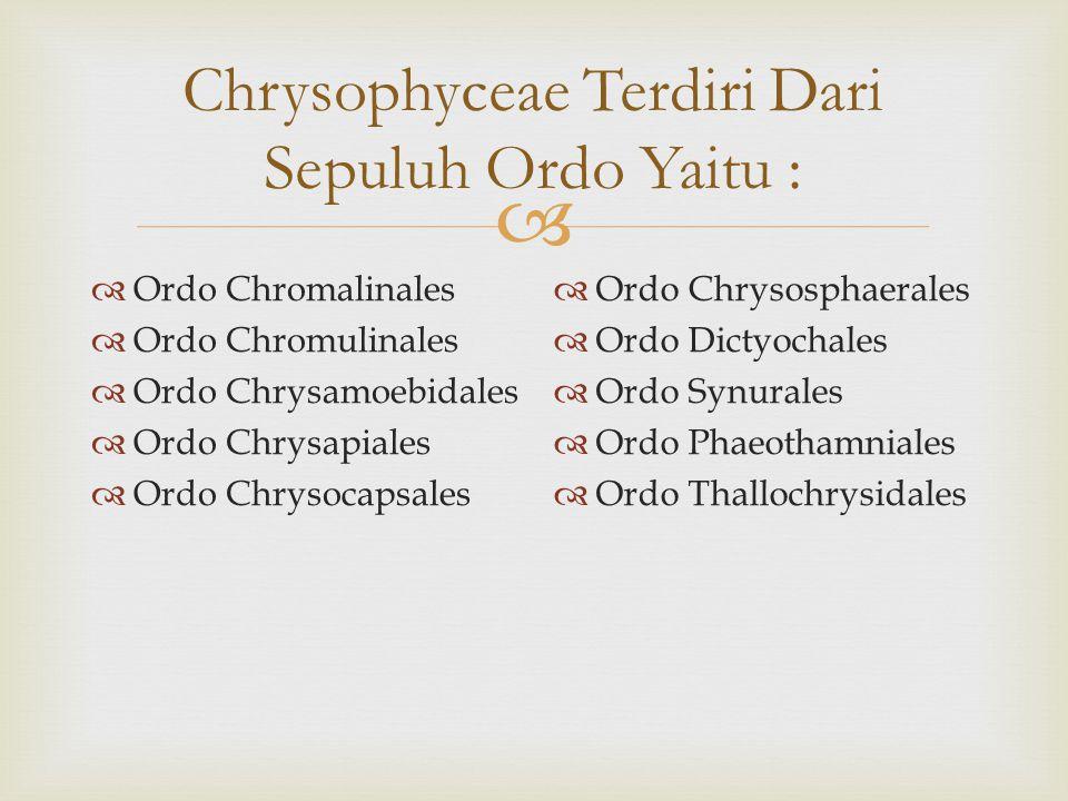 Chrysophyceae Terdiri Dari Sepuluh Ordo Yaitu :