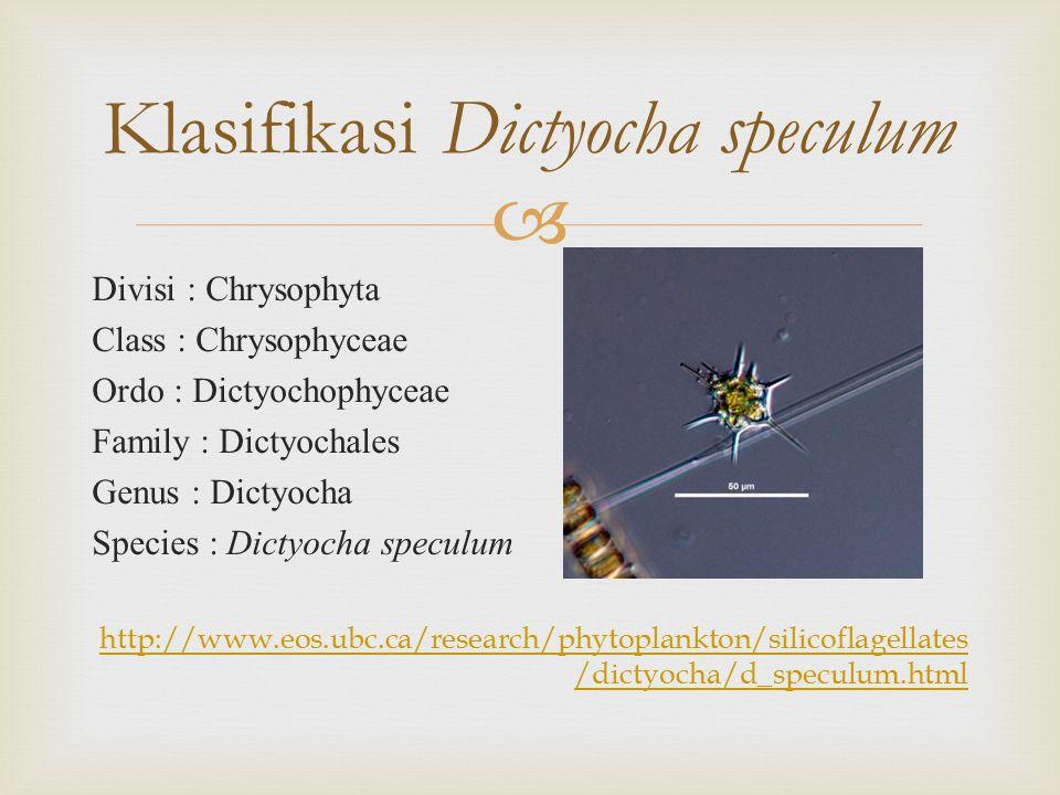 Klasifikasi Dictyocha speculum