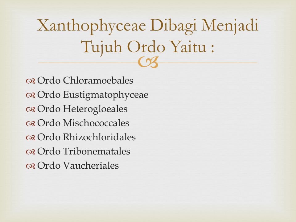 Xanthophyceae Dibagi Menjadi Tujuh Ordo Yaitu :