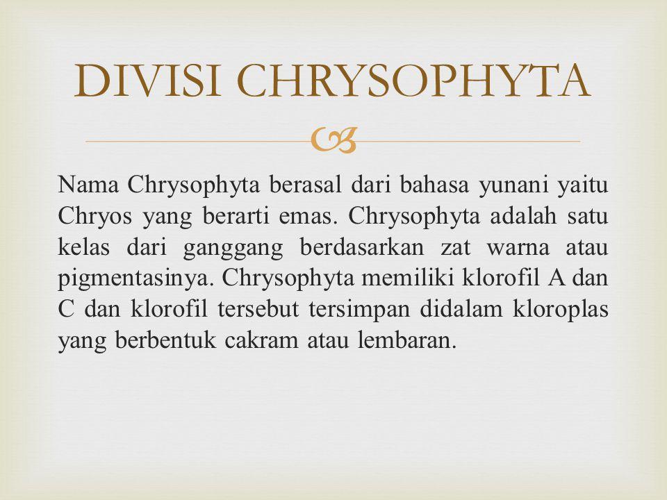 DIVISI CHRYSOPHYTA