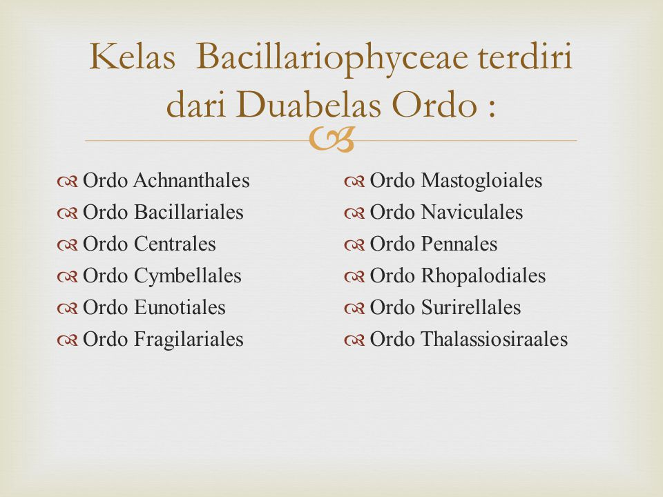 Kelas Bacillariophyceae terdiri dari Duabelas Ordo :
