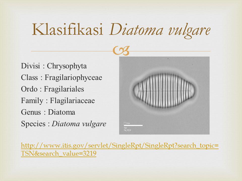 Klasifikasi Diatoma vulgare