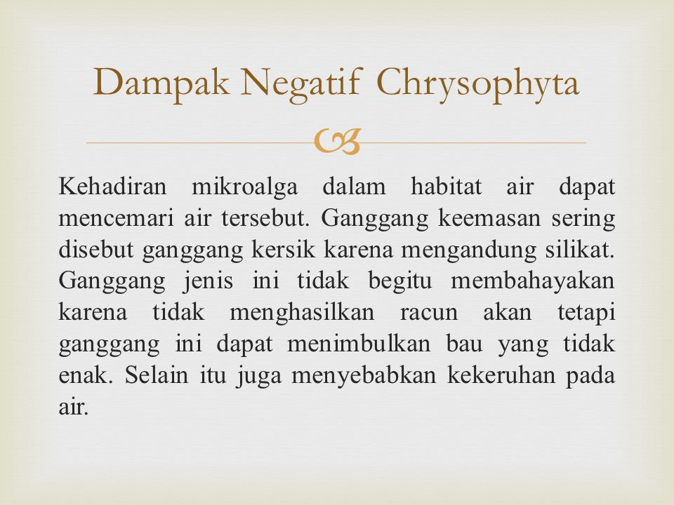Dampak Negatif Chrysophyta