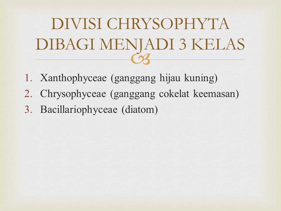 DIVISI CHRYSOPHYTA DIBAGI MENJADI 3 KELAS