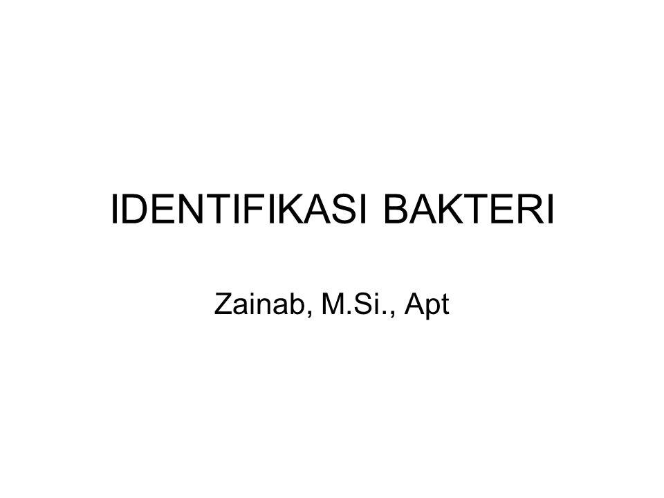 IDENTIFIKASI BAKTERI Zainab, M.Si., Apt