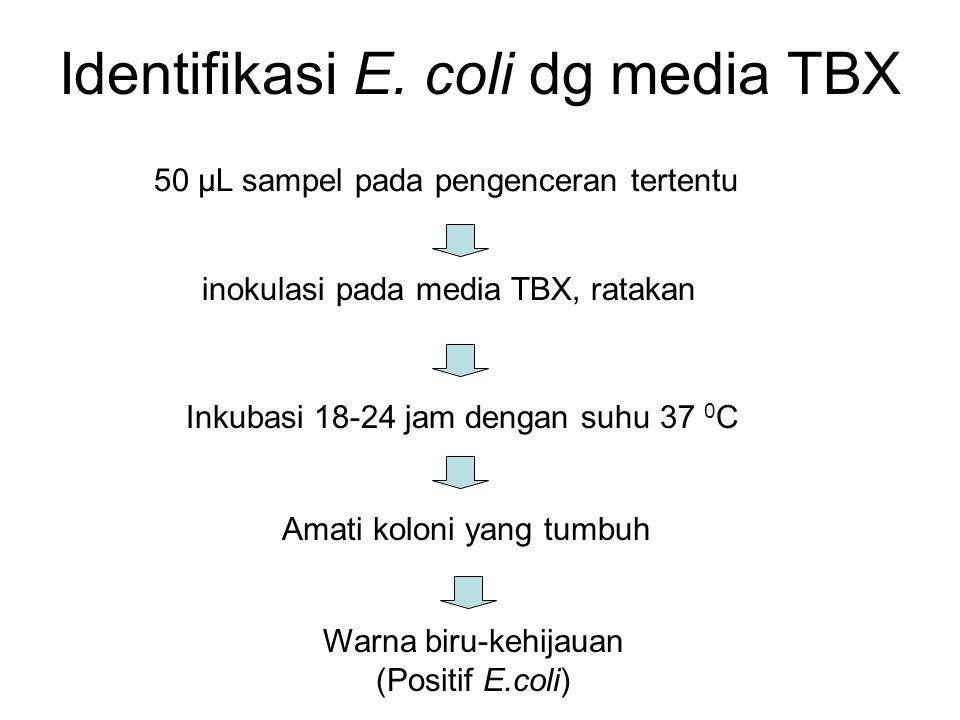 Identifikasi E. coli dg media TBX
