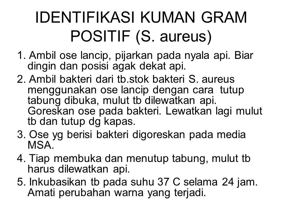 IDENTIFIKASI KUMAN GRAM POSITIF (S. aureus)