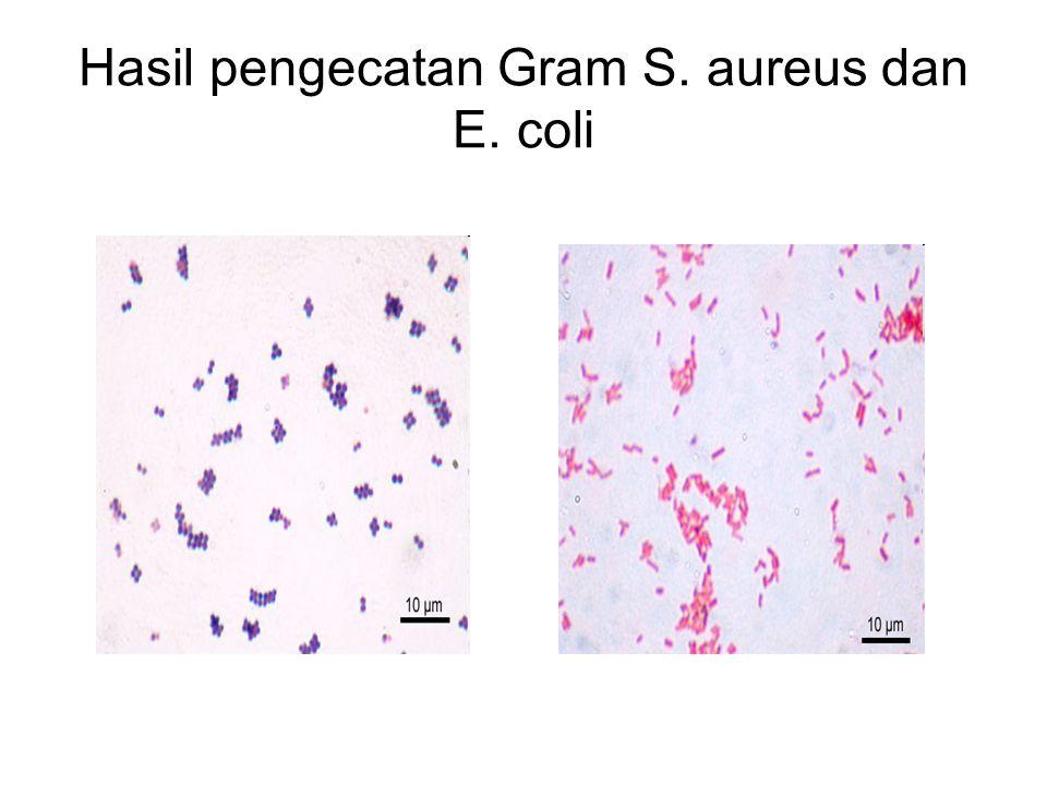Hasil pengecatan Gram S. aureus dan E. coli