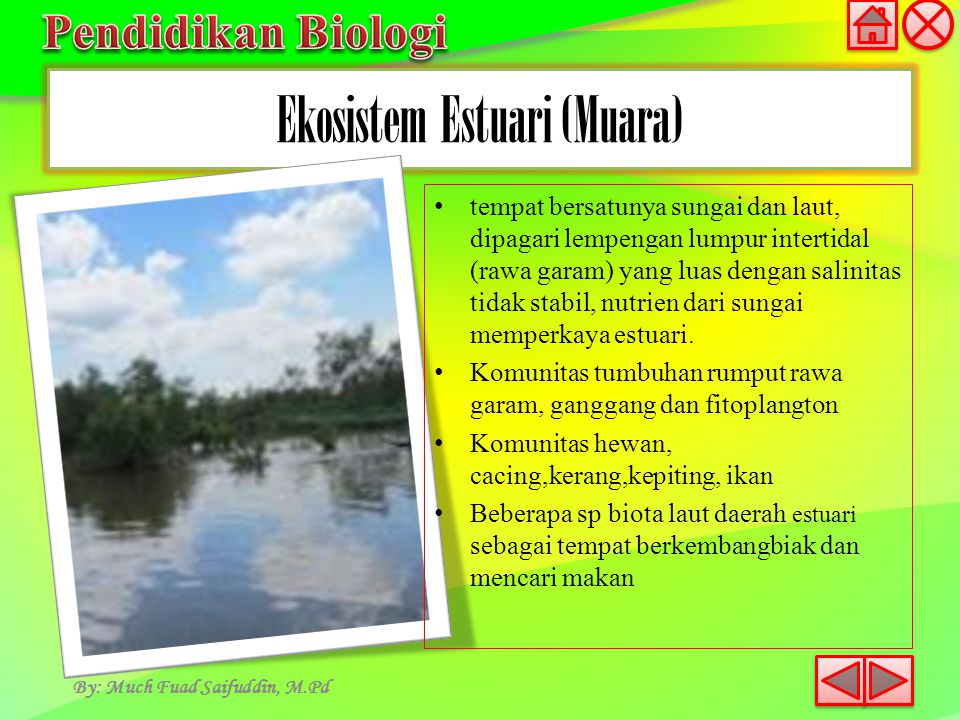 Ekosistem Estuari (Muara)