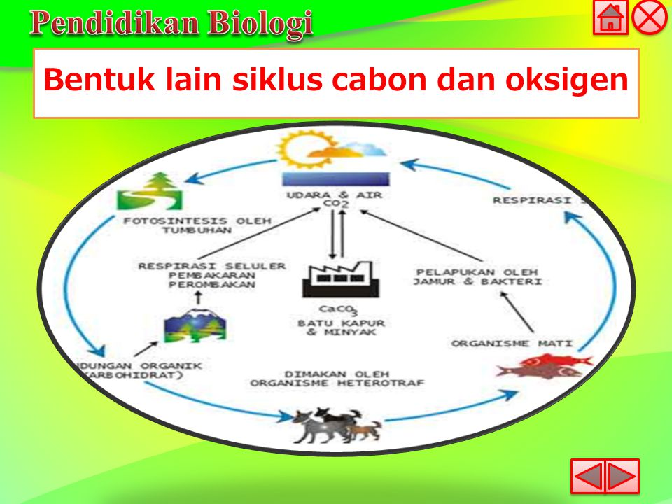 Bentuk lain siklus cabon dan oksigen
