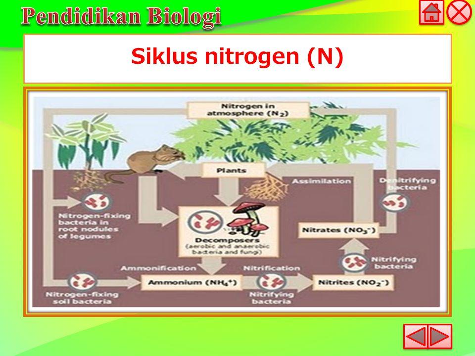 Siklus nitrogen (N)