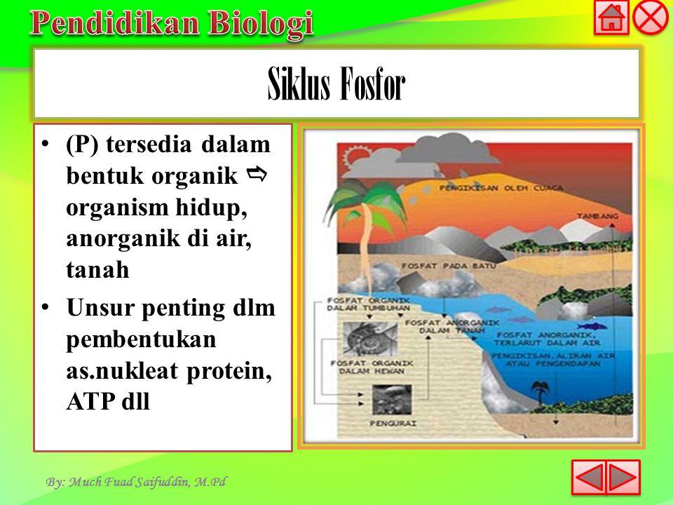 Siklus Fosfor (P) tersedia dalam bentuk organik  organism hidup, anorganik di air, tanah.