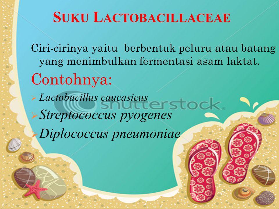 Suku Lactobacillaceae