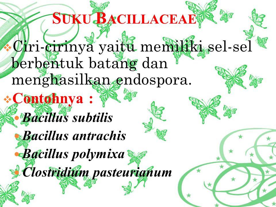 Suku Bacillaceae Ciri-cirinya yaitu memiliki sel-sel berbentuk batang dan menghasilkan endospora.