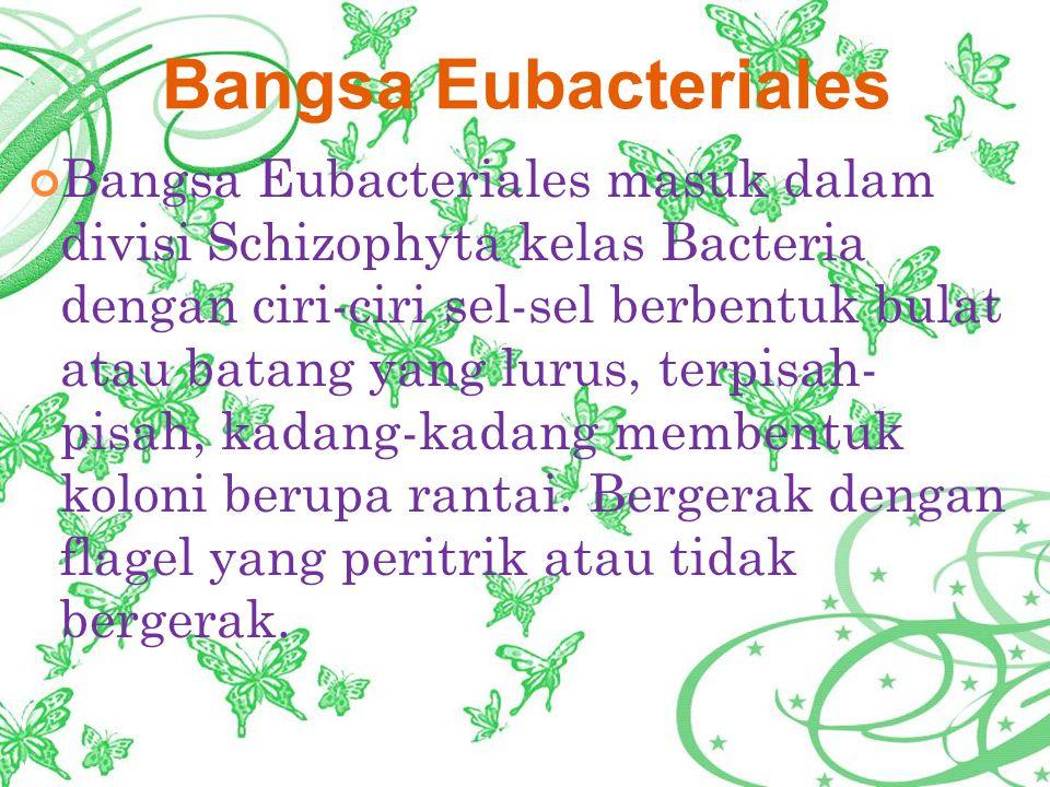 Bangsa Eubacteriales