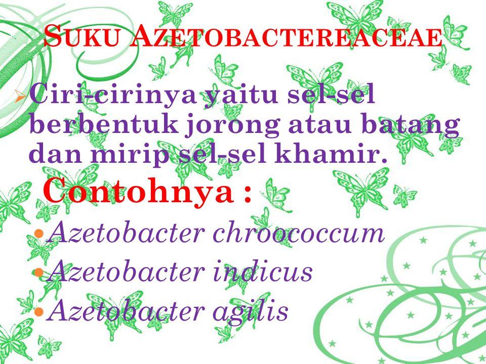 Suku Azetobactereaceae