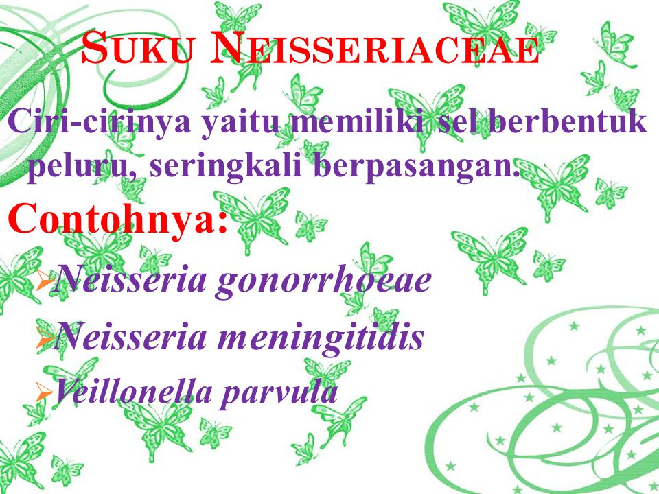 Contohnya: Neisseria gonorrhoeae Neisseria meningitidis