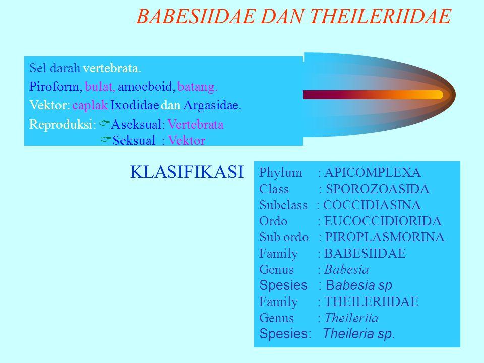 BABESIIDAE DAN THEILERIIDAE