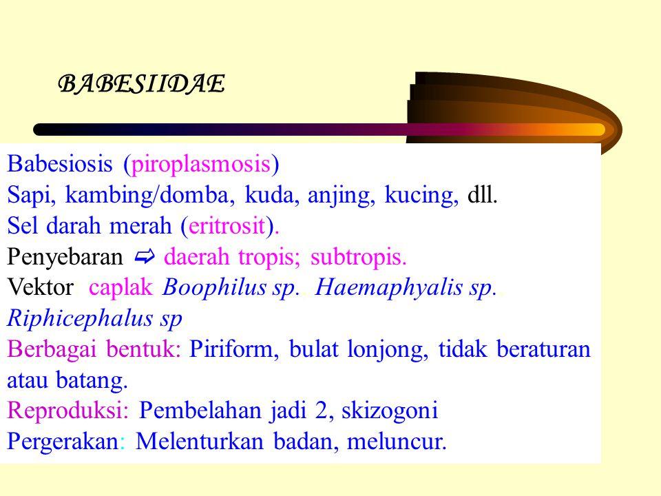 BABESIIDAE Babesiosis (piroplasmosis)
