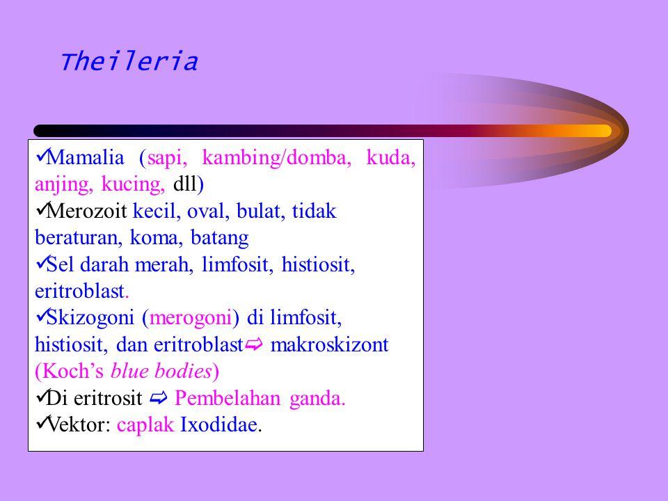 Theileria Mamalia (sapi, kambing/domba, kuda, anjing, kucing, dll)
