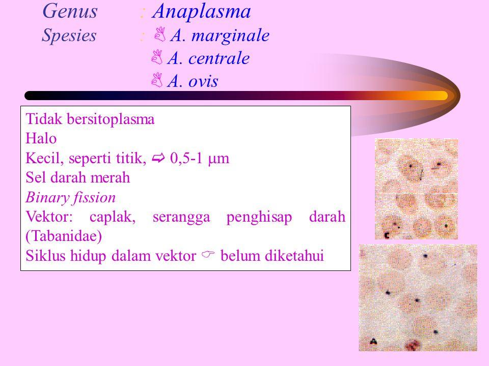 Genus : Anaplasma Spesies :  A. marginale  A. centrale  A. ovis