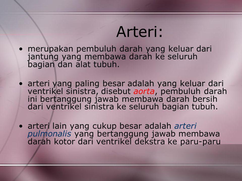 Arteri: merupakan pembuluh darah yang keluar dari jantung yang membawa darah ke seluruh bagian dan alat tubuh.