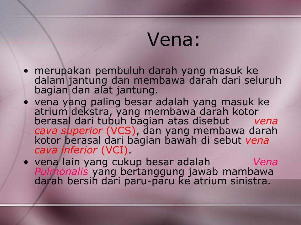 Vena: merupakan pembuluh darah yang masuk ke dalam jantung dan membawa darah dari seluruh bagian dan alat jantung.