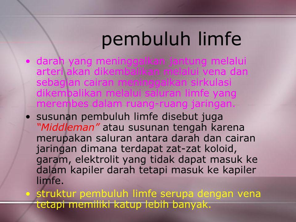 pembuluh limfe