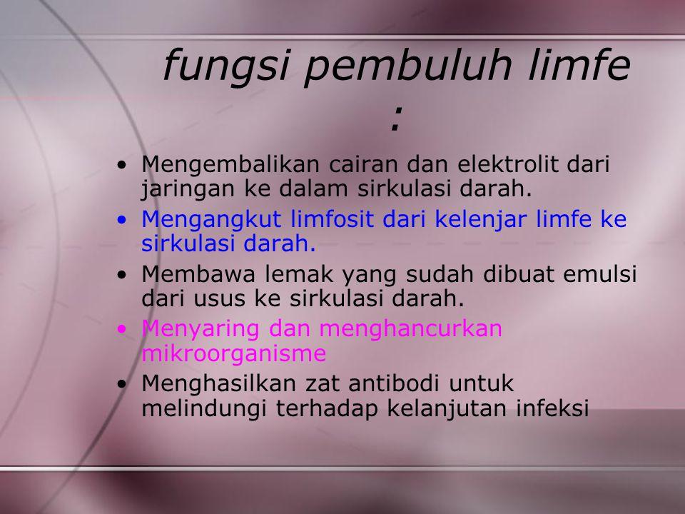 fungsi pembuluh limfe :