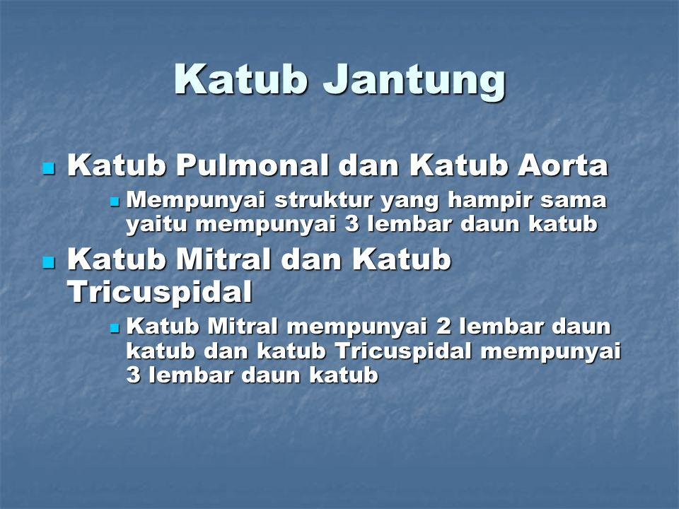 Katub Jantung Katub Pulmonal dan Katub Aorta
