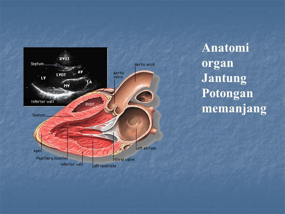 Anatomi organ Jantung.