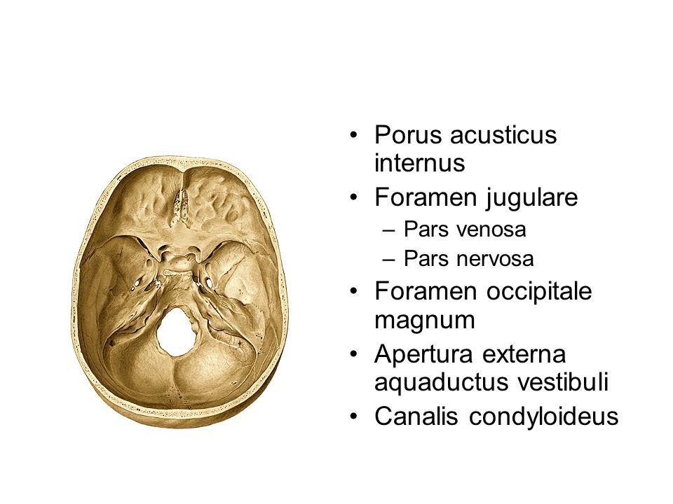 Porus acusticus internus Foramen jugulare