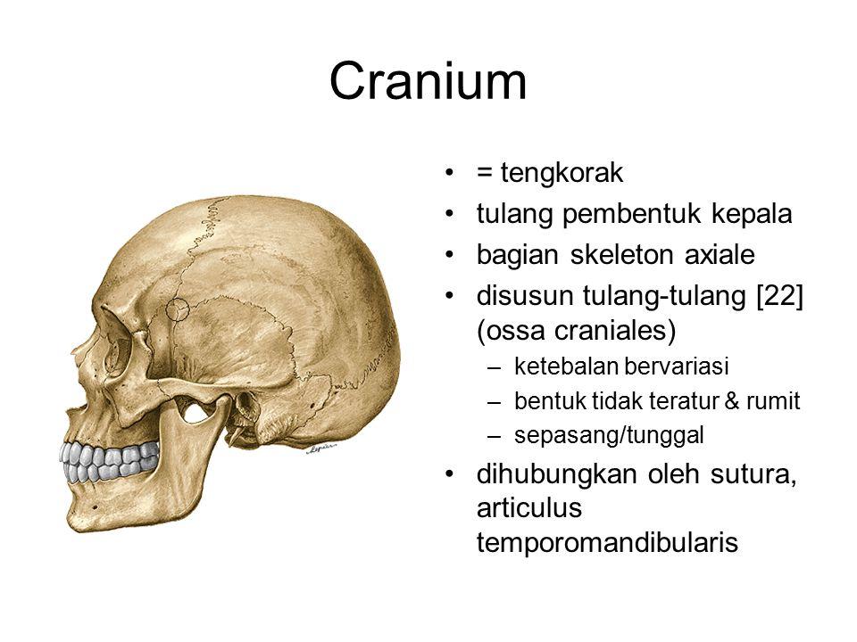 Cranium = tengkorak tulang pembentuk kepala bagian skeleton axiale