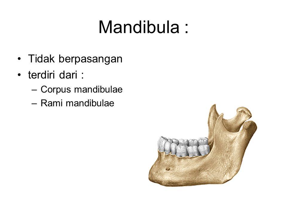 Mandibula : Tidak berpasangan terdiri dari : Corpus mandibulae