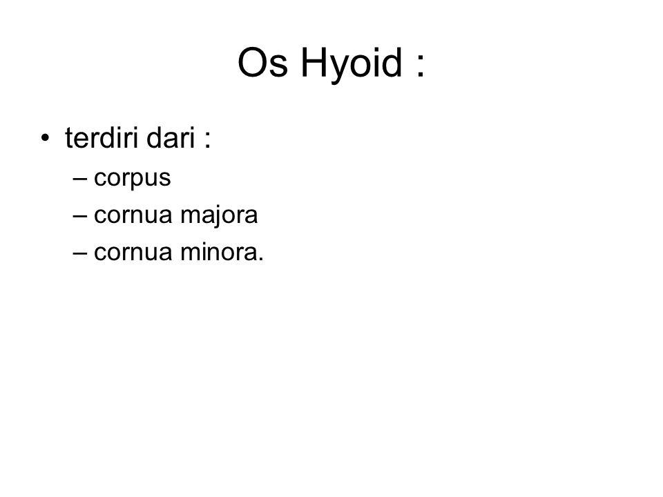 Os Hyoid : terdiri dari : corpus cornua majora cornua minora.