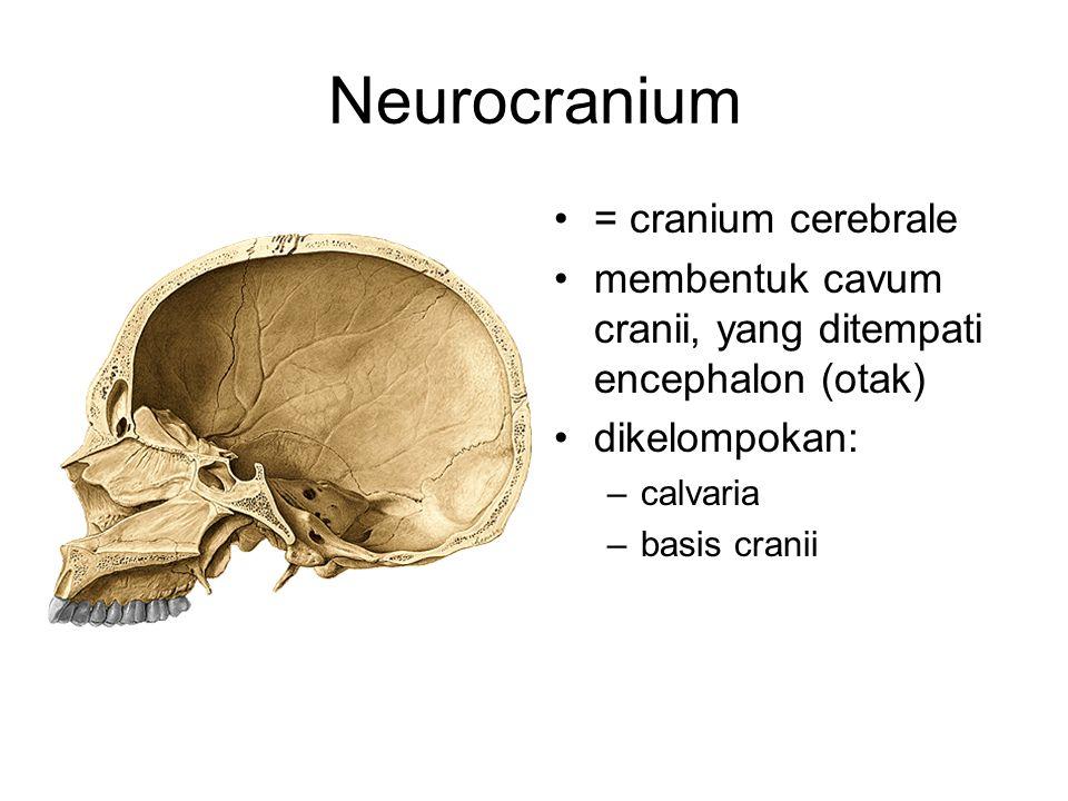 Neurocranium = cranium cerebrale