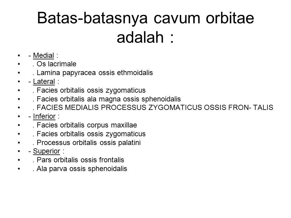 Batas-batasnya cavum orbitae adalah :