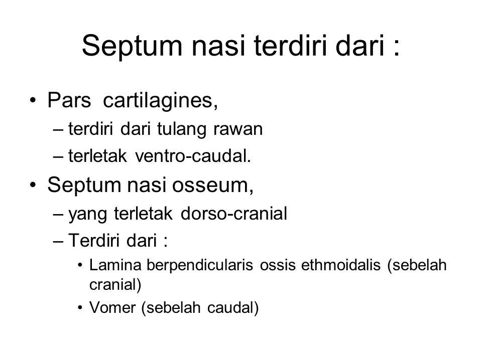 Septum nasi terdiri dari :