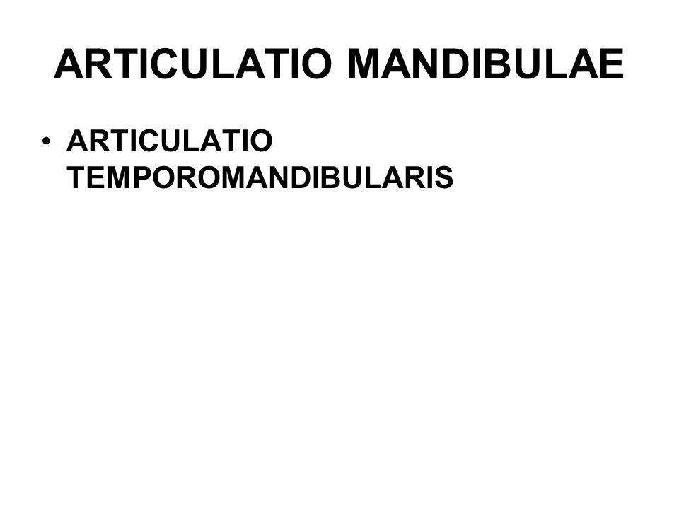 ARTICULATIO MANDIBULAE