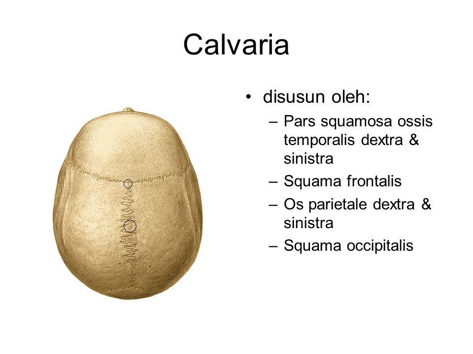 Calvaria disusun oleh: