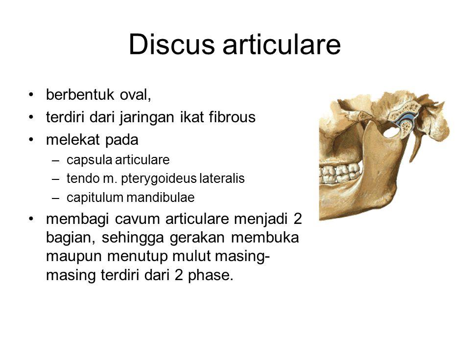 Discus articulare berbentuk oval, terdiri dari jaringan ikat fibrous