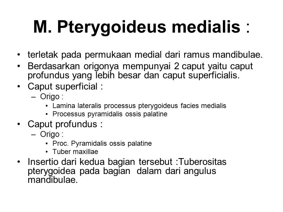 M. Pterygoideus medialis :