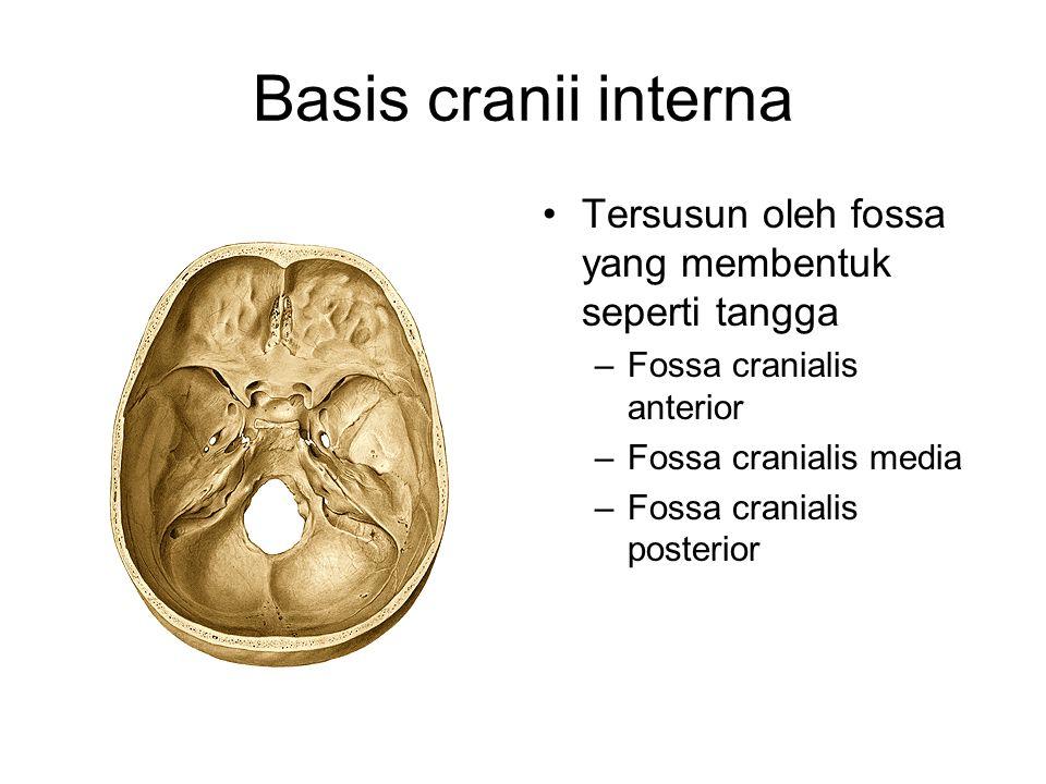 Basis cranii interna Tersusun oleh fossa yang membentuk seperti tangga