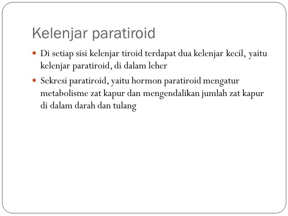 Kelenjar paratiroid Di setiap sisi kelenjar tiroid terdapat dua kelenjar kecil, yaitu kelenjar paratiroid, di dalam leher.