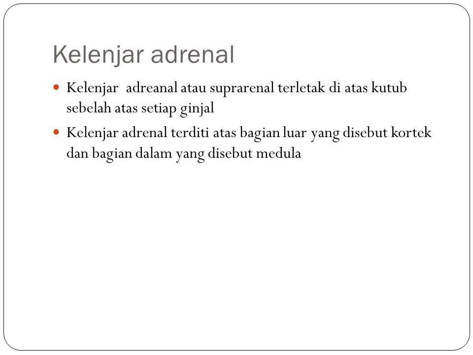 Kelenjar adrenal Kelenjar adreanal atau suprarenal terletak di atas kutub sebelah atas setiap ginjal.