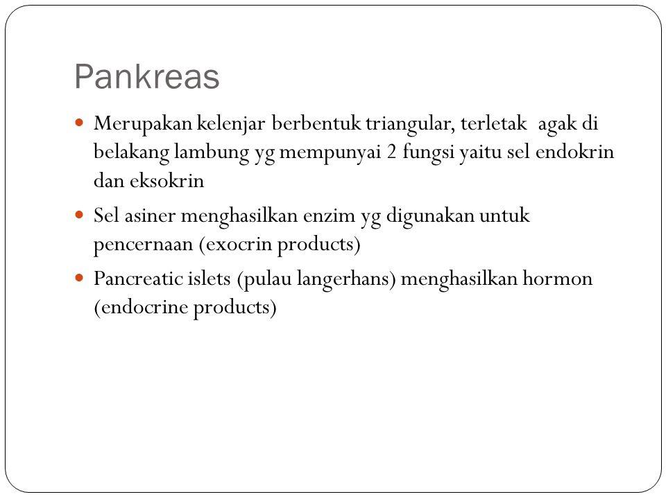 Pankreas Merupakan kelenjar berbentuk triangular, terletak agak di belakang lambung yg mempunyai 2 fungsi yaitu sel endokrin dan eksokrin.