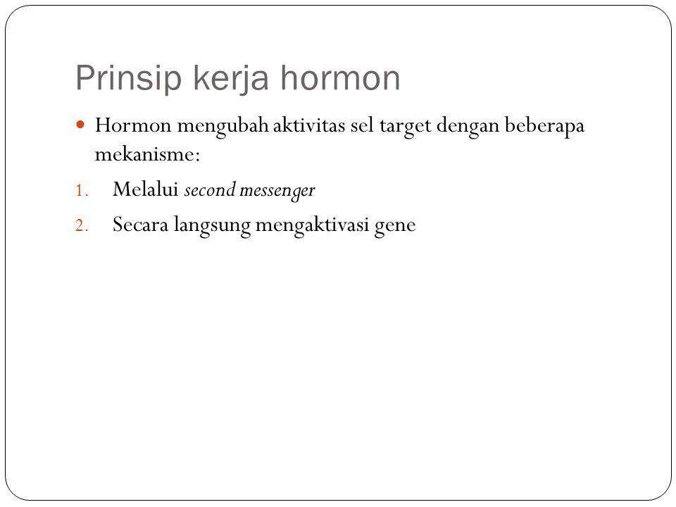 Prinsip kerja hormon Hormon mengubah aktivitas sel target dengan beberapa mekanisme: Melalui second messenger.