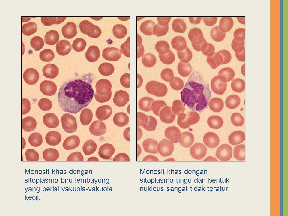 Monosit khas dengan sitoplasma biru lembayung yang berisi vakuola-vakuola kecil.