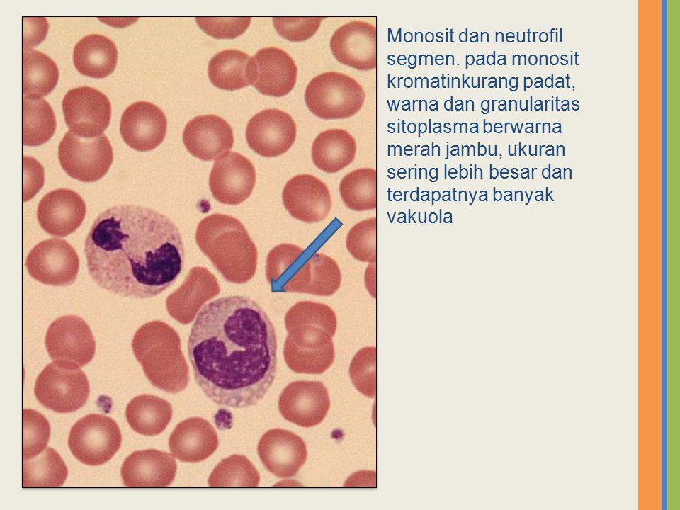 Monosit dan neutrofil segmen